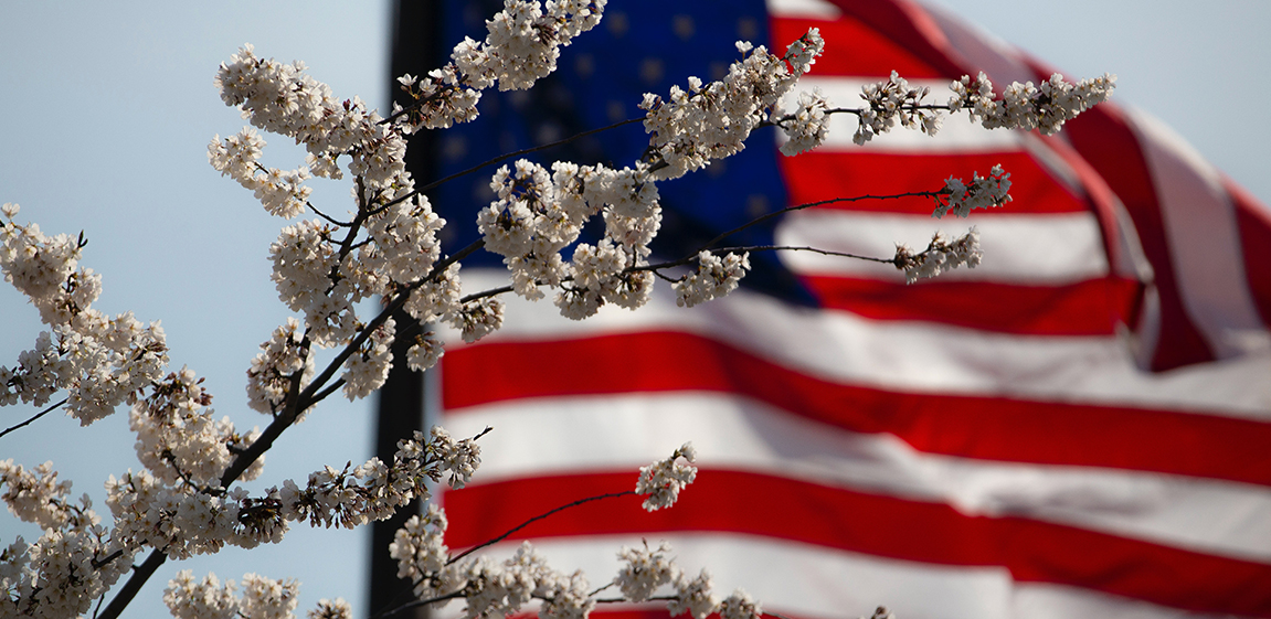 Flag of USA with white flowers